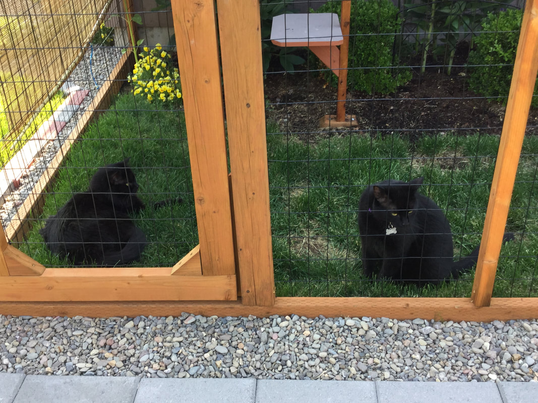 Cats enjoying their catio